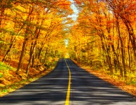 Fall Road Trip Apps